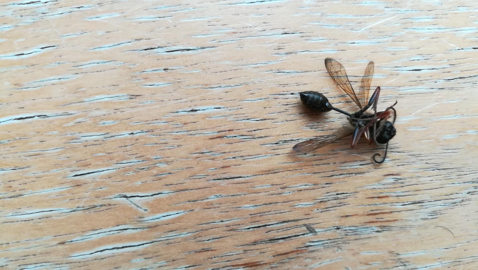 Foto: Totes Insekt auf Fensterbank